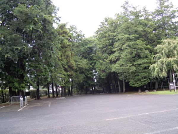 公園北部分の檜の森。天然ではなく、遊具の材料の為に松林したのでしょうか?100年近い樹齢です。